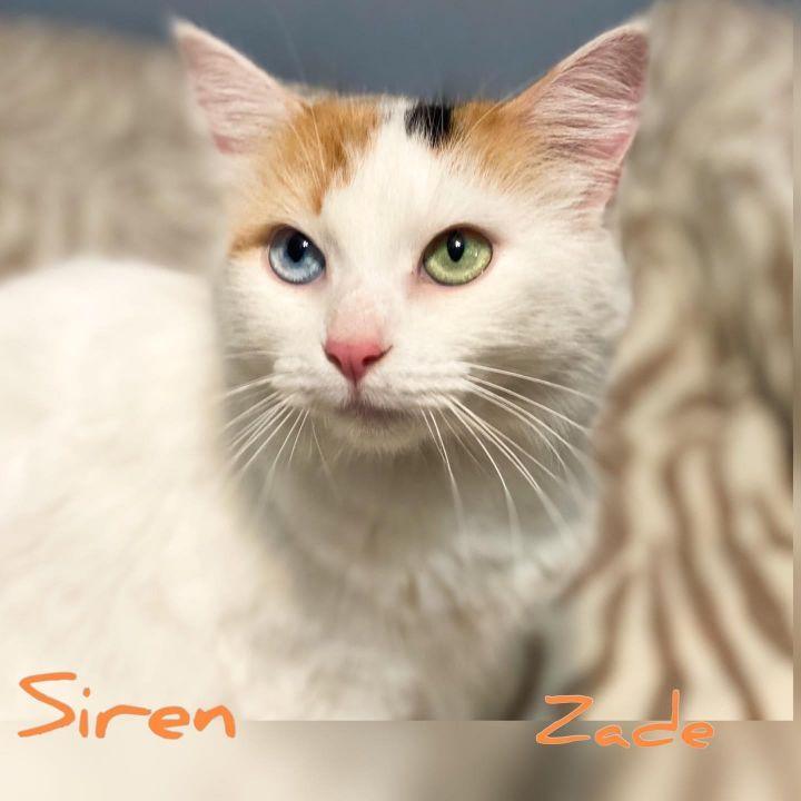 Siren A-3871 1