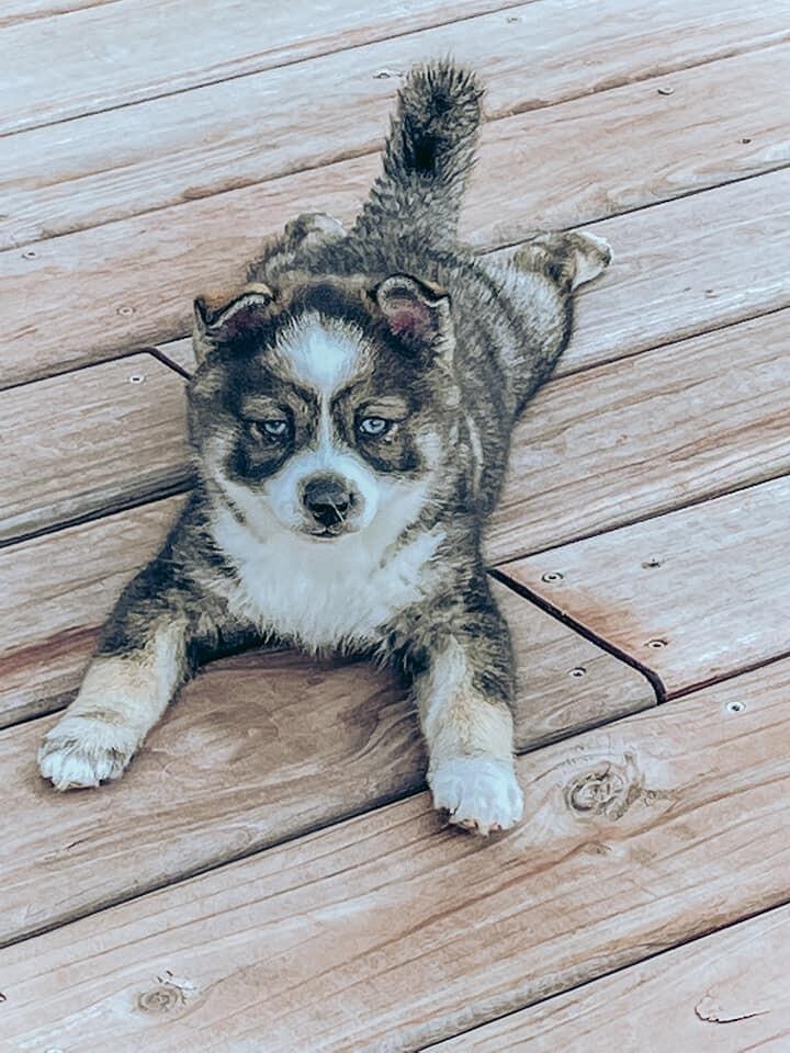 Tiara-adoption pending 1