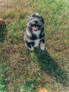 Vista-adoption pending