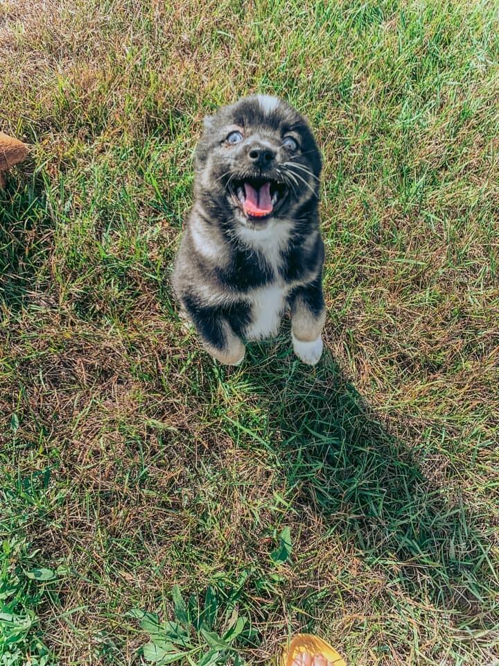 Vista-adoption pending 2