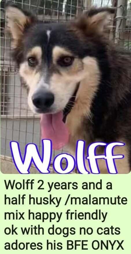 Wolff 2
