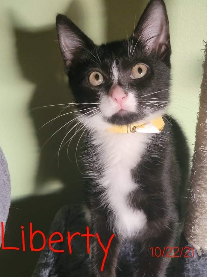 Liberty A-4174 1