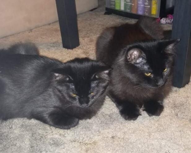 Obsidian (Obi) and Onyx 1