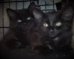 Obsidian (Obi) and Onyx 4