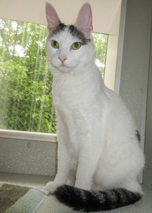 Looking for love Mr Fou is an affectionate youngster looking for another family to love This swee