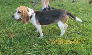 Wednesday came to use as a stray We dont know much about her yet httpsgraingercountyhumanesoci