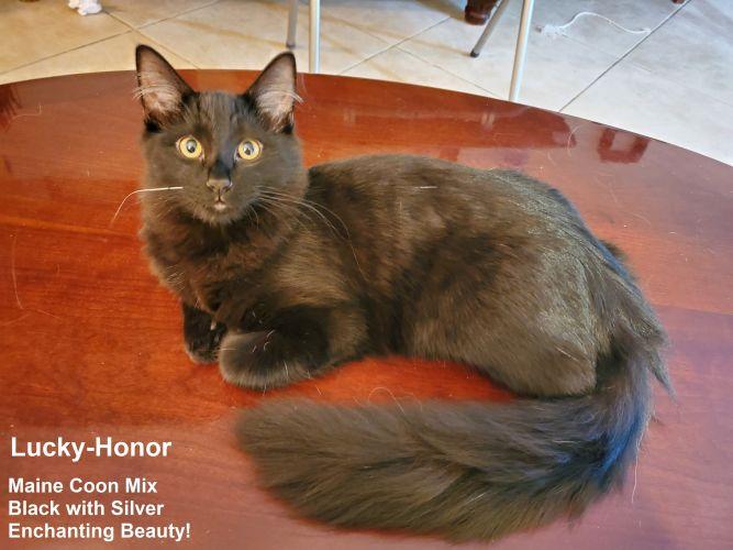 Lucky Honor - The Enchanting Beauty!