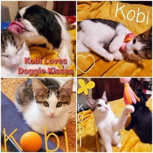 Kobi - The Majestic Beauty!