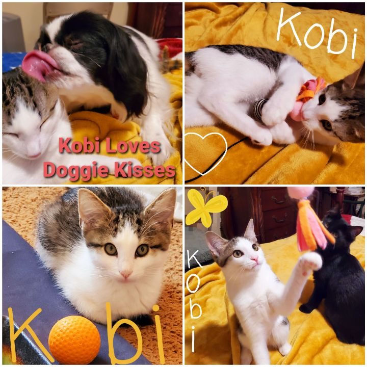 Kobi - The Majestic Beauty! 1