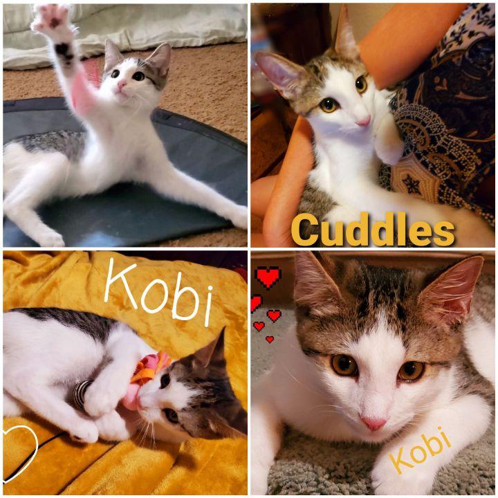 Kobi - The Majestic Beauty! 3