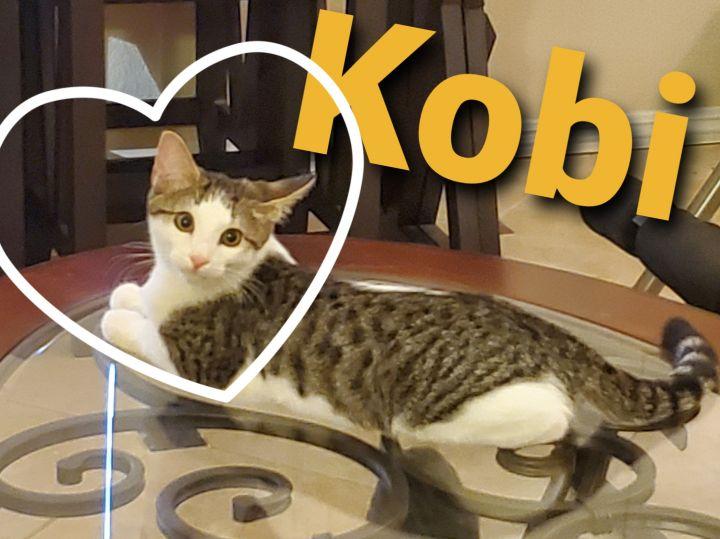 Kobi - The Majestic Beauty! 5
