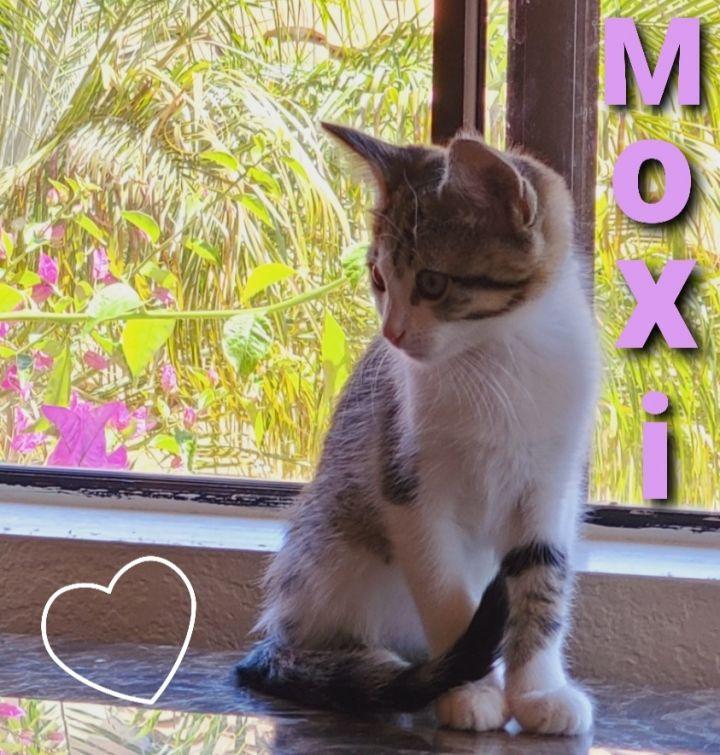 Lady Moxi - Captivating Beauty! 5