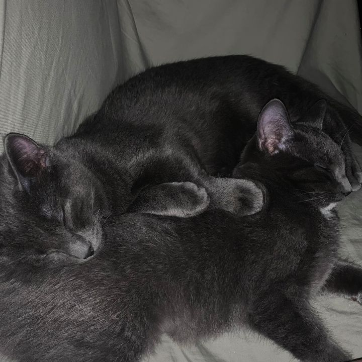 Chantilly & Charlie (Bonded Pair) 1