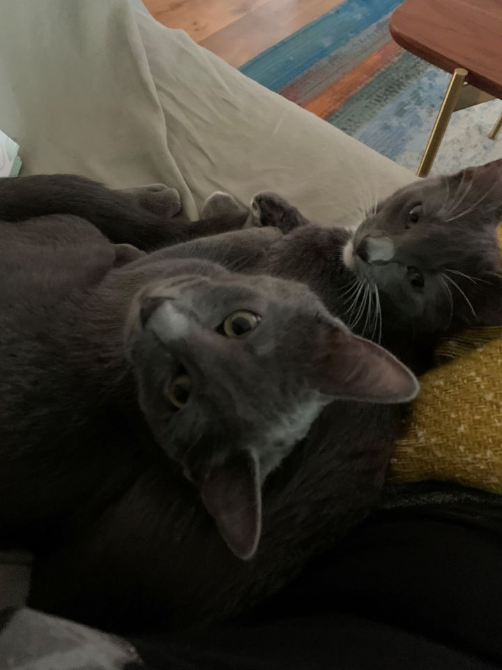 Chantilly & Charlie (Bonded Pair) 4