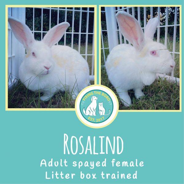Photo of Rosalind