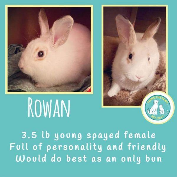 Photo of Rowan