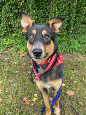 Parker Shepherd Dog