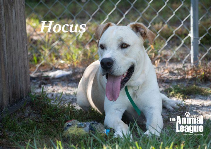 Hocus 2