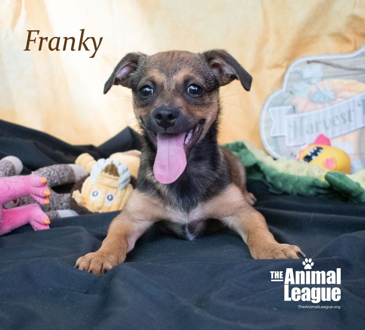 Franky 2
