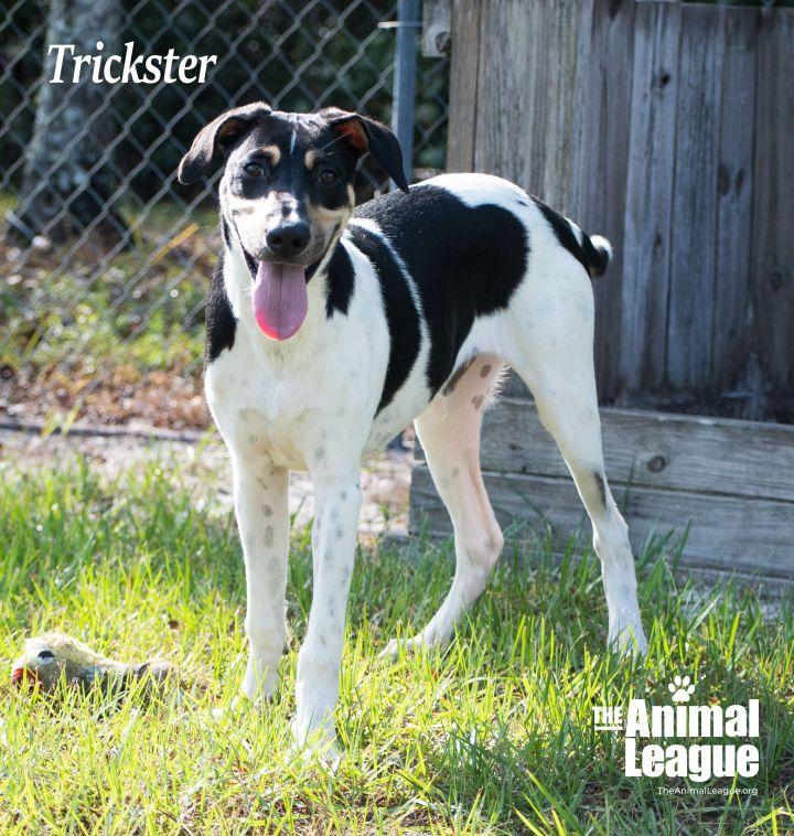 Trickster 4