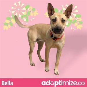 BELLA German Shepherd Dog Dog