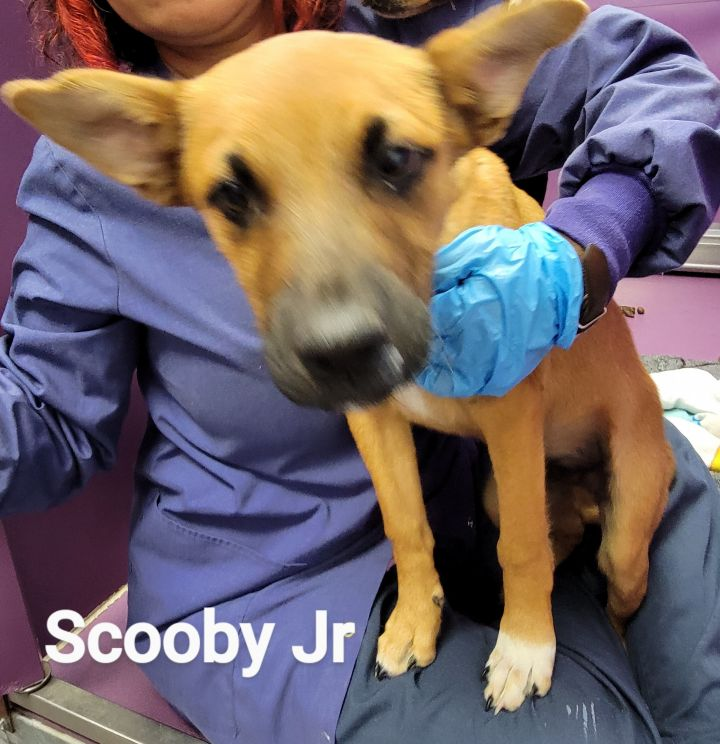 Scooby Jr 1
