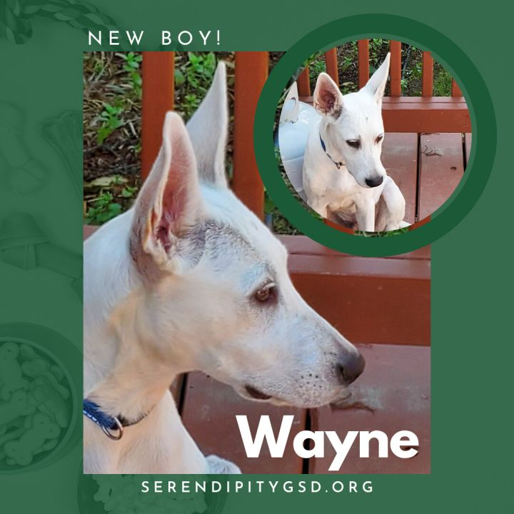Wayne 1