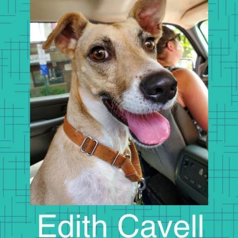 Edith Cavell (Eddy) 1