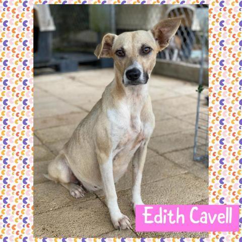 Edith Cavell (Eddy) 2