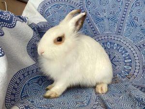 KENNY Bunny Rabbit Rabbit