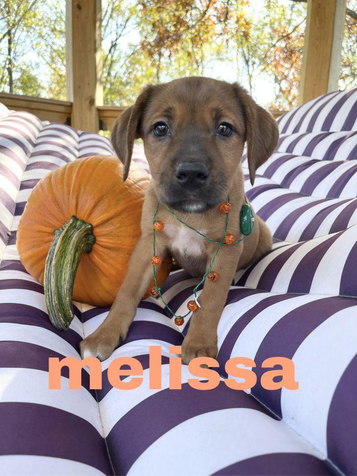 melissa(Event Saturday 1-4 Premier Pet Supply 13 mile/Southfield rd) 2