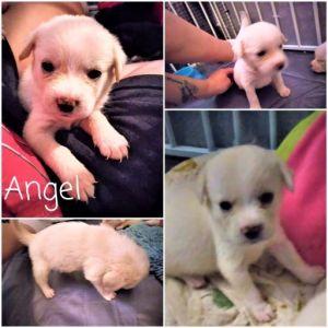 Angel - Karen