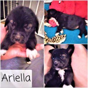 Ariella - Karen