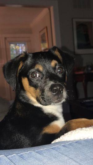 Teddy (SC) Hound Dog