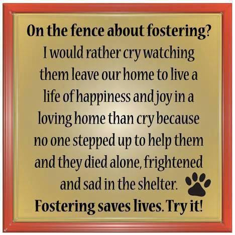 Fosters Needed! 1