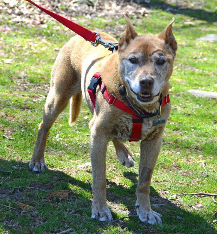 Cam, an adopted Shepherd Mix in Middletown, NY