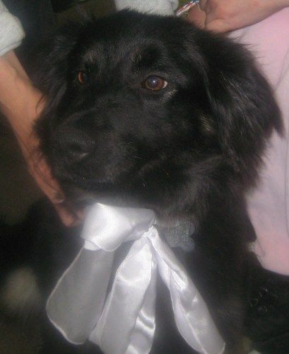 Holly~ADOPTED!